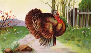Turkey illustration