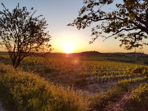 Sunrise (Again) Over the Vineyard